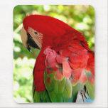 Macaw rojo Mousepad 2 Tapete De Raton