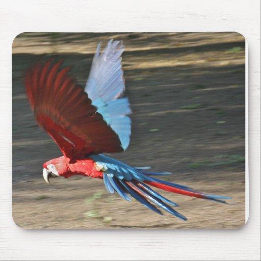 Macaw Rojo-y-Azul en vuelo Tapete De Ratones