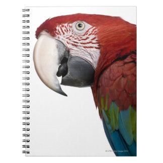 Macaw Rojo-y-verde - chloropterus del Ara Libreta