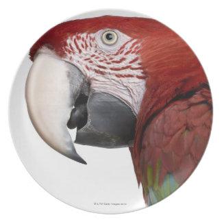 Macaw Rojo-y-verde - chloropterus del Ara Platos