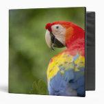 "Macaw salvaje del escarlata, selva tropical, Costa Carpeta 1 1/2"""