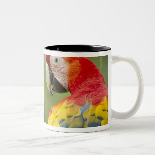 Macaw salvaje del escarlata, selva tropical, Costa Tazas De Café