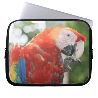 macaw scarlet computer sleeve