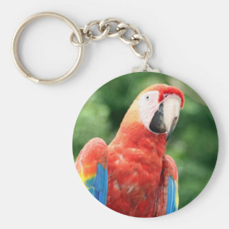 macaw scarlet face basic round button keychain