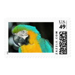 Macaw Sello