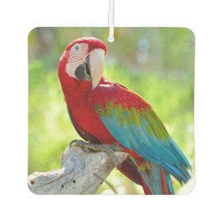 Macaw sitting on branch car air freshener