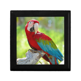 Macaw sitting on branch gift box