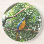 Macaw sitting on the branch in Jurong Bird Park Beverage Coaster
