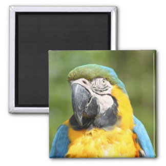 Macaw Square magnet