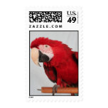 Macaw stamps