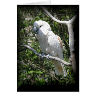 Macaw Stationery Note Card
