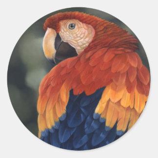 Macaw Stickers