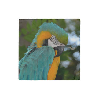 Macaw Stone Magnet