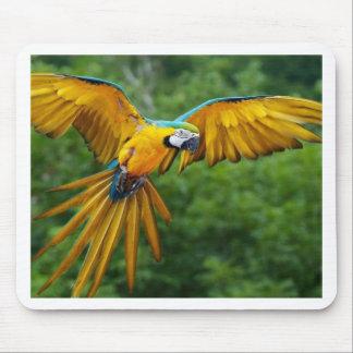 Macaw Alfombrilla De Raton