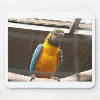 Macaw Tapete De Ratones
