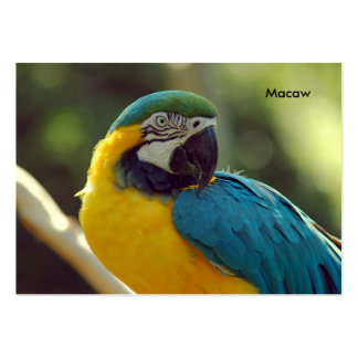 macaw plantillas de tarjetas de visita