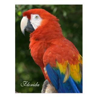 Macaw Tarjeta Postal