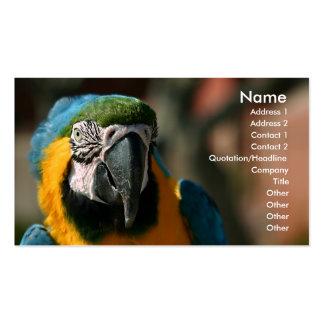 Macaw Tarjetas De Visita