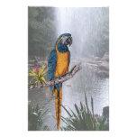 Macaw Throated azul con la cascada Papeleria