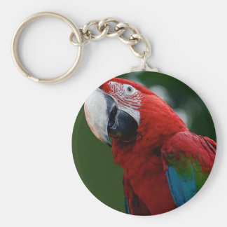 Macaw Up Close Key Chains