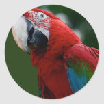 Macaw Up Close Stickers