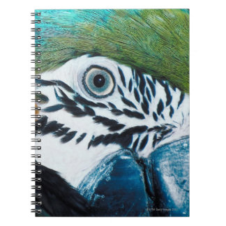 MacawÊ Azul-y-amarillo Libro De Apuntes