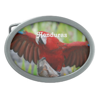 Macaws Oval Belt Buckle