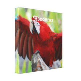 Macaws Canvas Prints