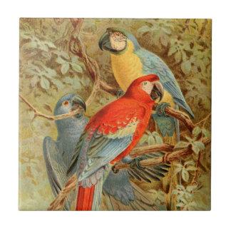 Macaws coloridos del vintage azulejo cuadrado pequeño