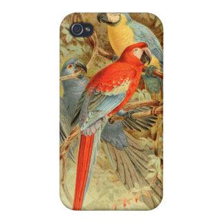 Macaws coloridos del vintage iPhone 4 coberturas