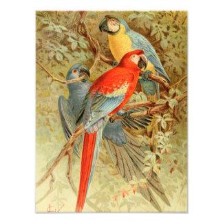 Macaws coloridos del vintage fotografías