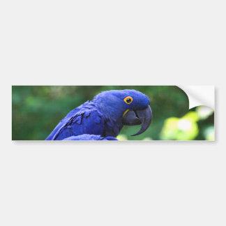 Macaws del jacinto pegatina para auto