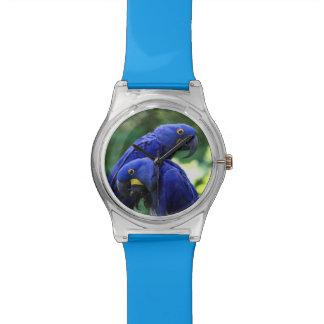 Macaws del jacinto relojes de pulsera