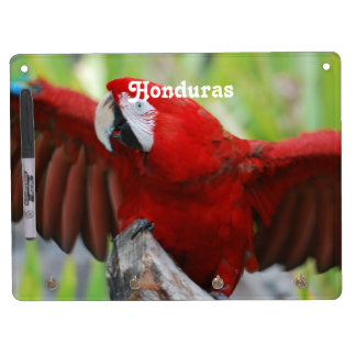 Macaws Dry-Erase Boards
