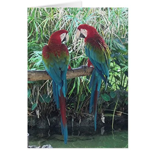 Macaws Greeting Cards