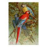 Macaws Impresiones