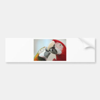 macaws kiss bumper sticker