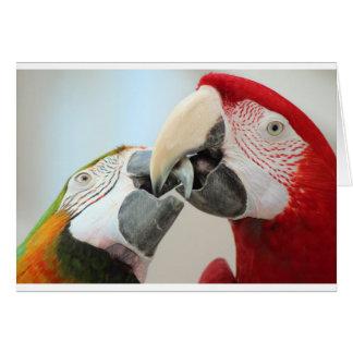 macaws kiss card