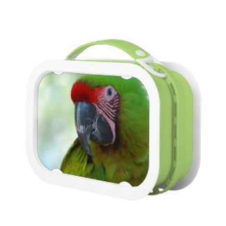Macaws Yubo Lunch Box