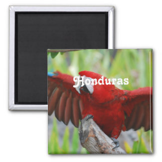 Macaws Magnets