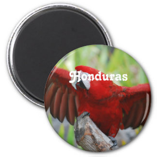 Macaws Refrigerator Magnet