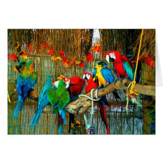 Macaws on Parade Greeting Cards