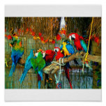 Macaws on Parade Poster