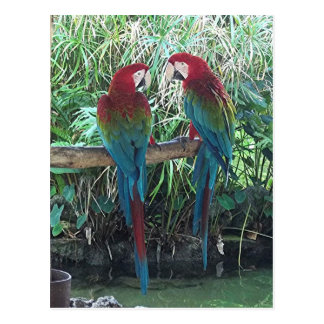Macaws Post Cards