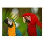 macaws postcards