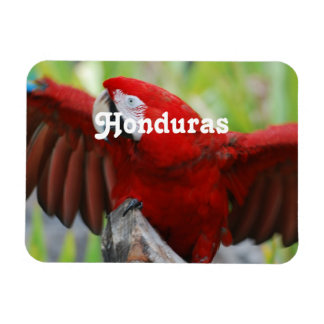 Macaws Magnet