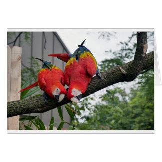 Macaws rojos 1.JPG Tarjeta De Felicitación