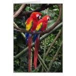 macaws rojos felicitacion