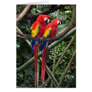 macaws rojos tarjeta de felicitación