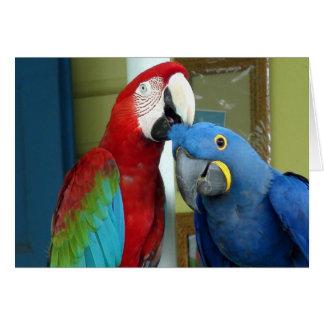 Macaws rojos y azules coloridos tarjeta de felicitación
